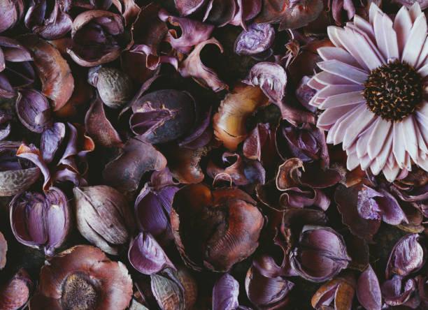 Directly above on a purple floral pattern of dried flowers nature picture id650630176?b=1&k=6&m=650630176&s=612x612&w=0&h=pnzwnxkmermnigjmb0es8417nyoqzqnvl3l6q6dqfci=