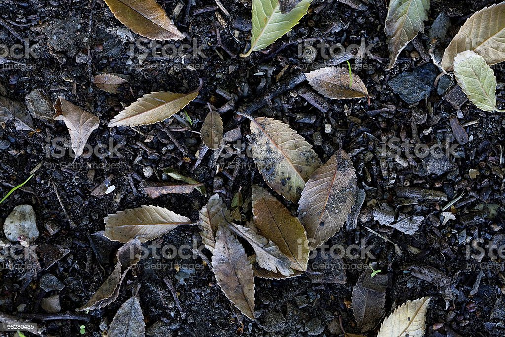 Dirt and Leaves background royalty-free stock photo