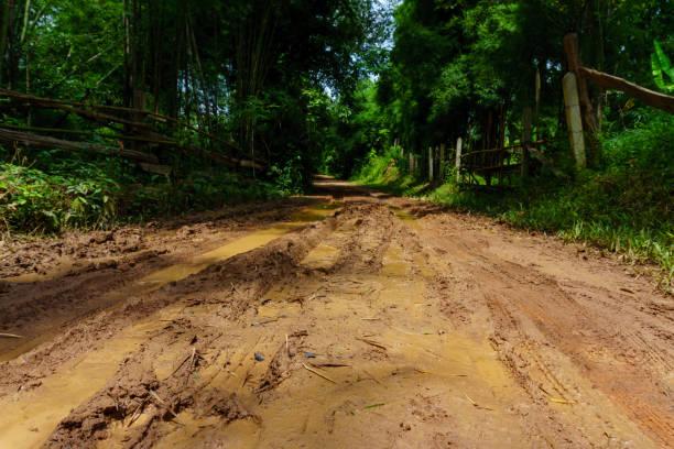 sujeira e enlameada estrada rural durante uma viagem selva através da floresta de bambu na aldeia no campo depois da chuva. - estrada em terra batida - fotografias e filmes do acervo