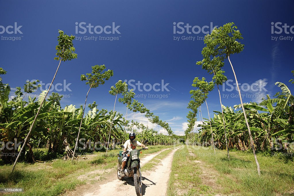 Dirt Biking Down Rubber Tree Avenue Phuket royalty-free stock photo