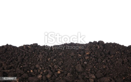 A border of black dirt with a white background and copy space.PLEASE CLICK ON THE IMAGE BELOW TO SEE MY SEEDLINGS LIGHTBOX: