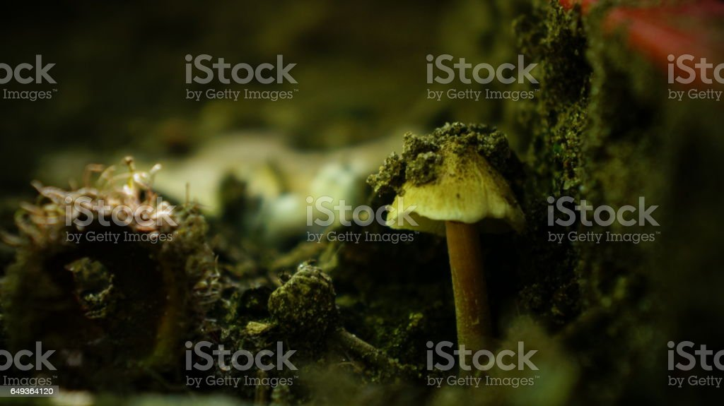 Dirt Covered Mushroom Near A Red Crate stock photo