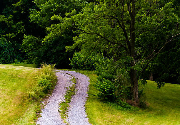 Dirt driveway and tree on a hill. stock photo
