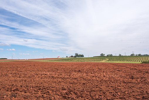 Dirt Field Ready To Be Farmed Stock Photo - Download Image Now