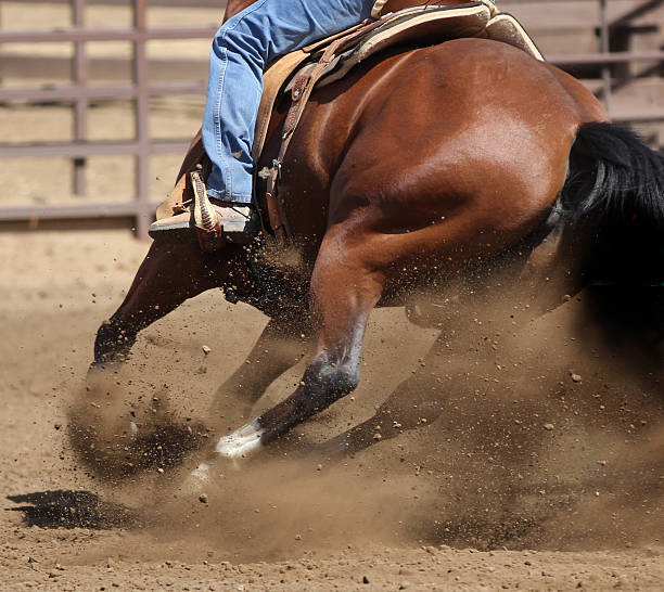 Dirt flying action photography of a horse making a fast turn. stock photo