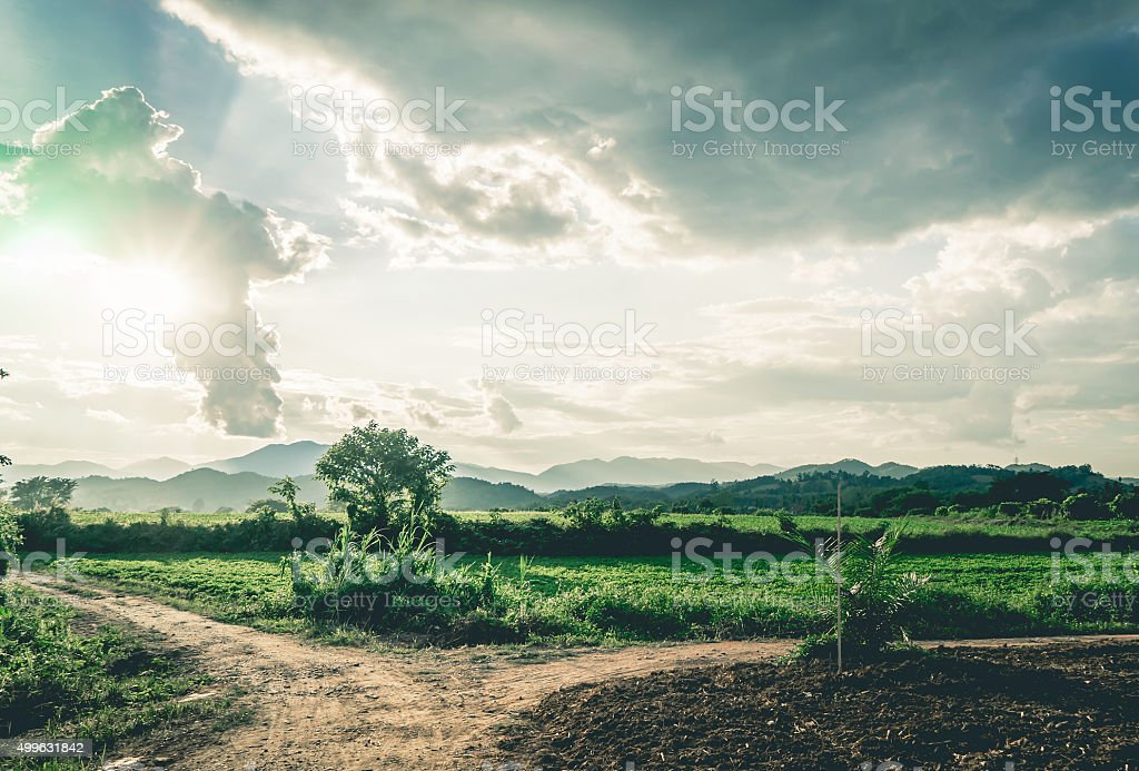 Dirt Fork Road Paddy in mountain with Golden sky stock photo