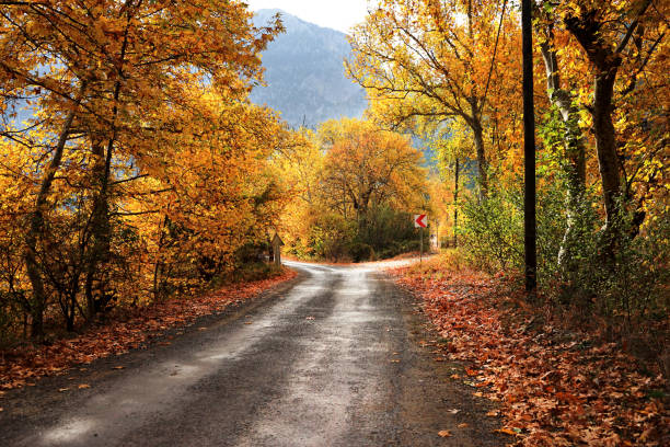 dirt forked country road with colorful autumn leaves and trees in forest Landscape image of dirt forked country road with colorful autumn leaves and trees in forest of Mersin, Turkey fork in the road stock pictures, royalty-free photos & images