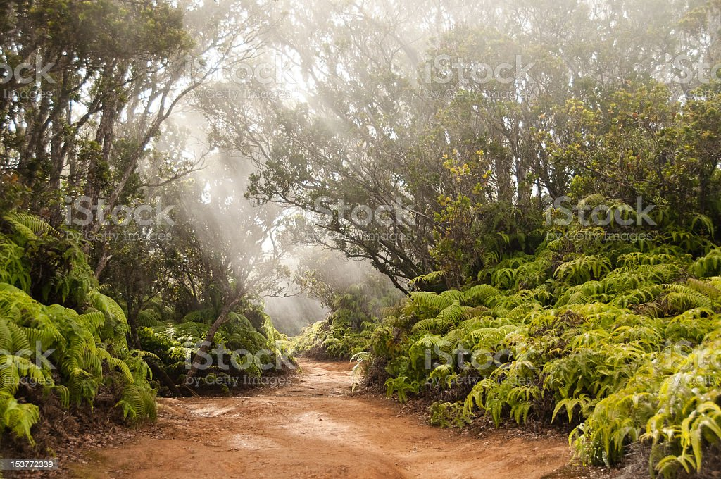 Dirt jungle path with several sunbeams stock photo