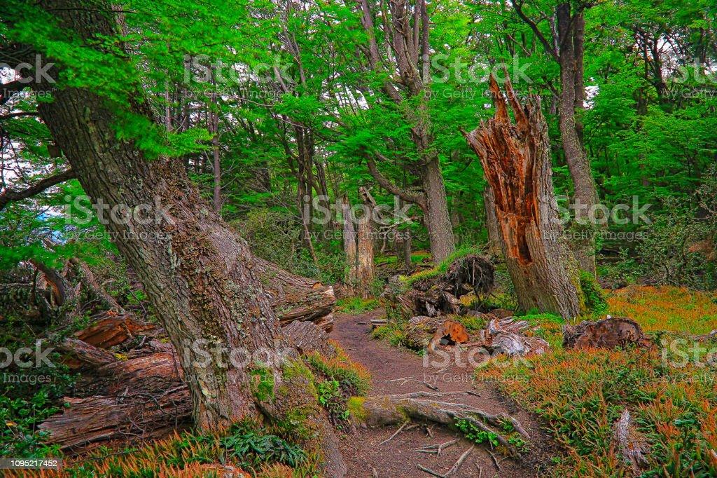 Pista de caminhada de caminho de sujeira em bosques em Ushuaia - Terra do fogo, Argentina - foto de acervo