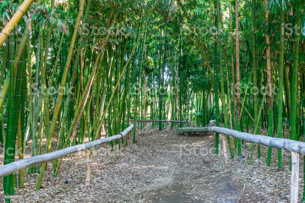 Dirt Path With A wooden Bench in Bamboo Forest stock photo
