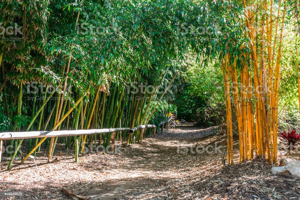 Dirt Path With Fence in a Bamboo Forest stock photo