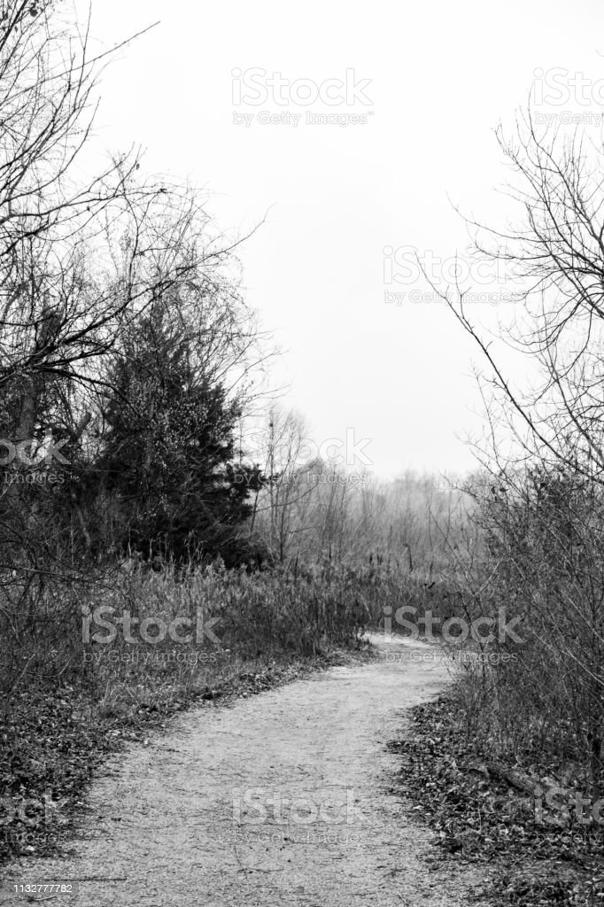 dirt path with trees and grasses stock photo