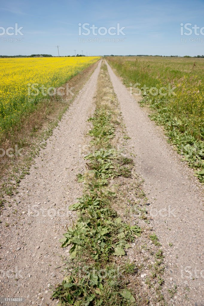 dirt road across prairie landscape royalty-free stock photo