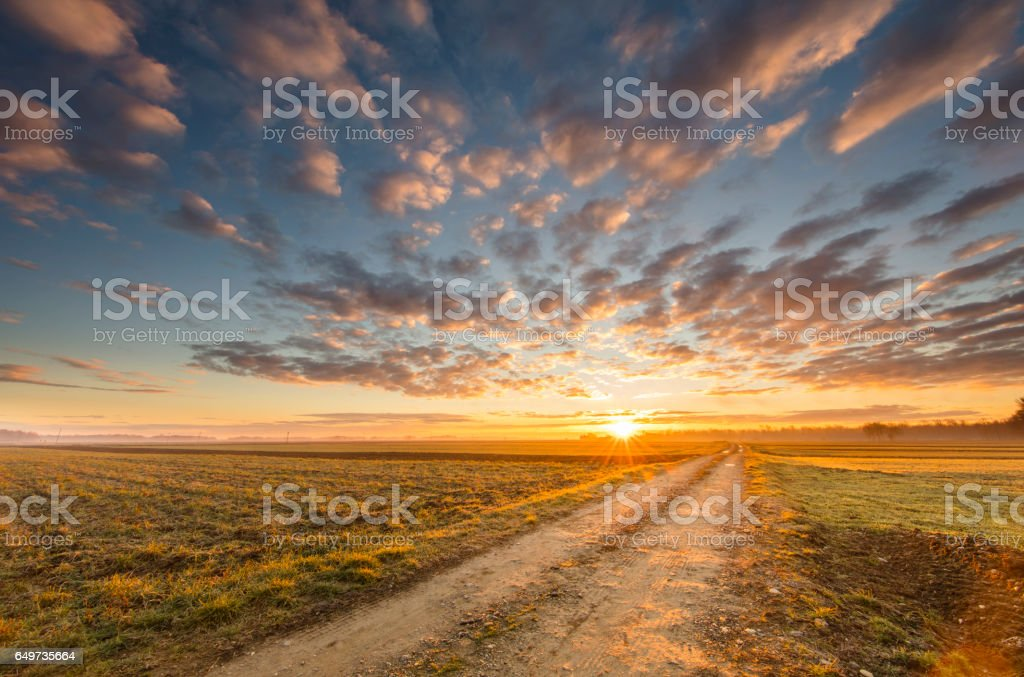 Dirt road amidst young wheat fields during sunset stock photo