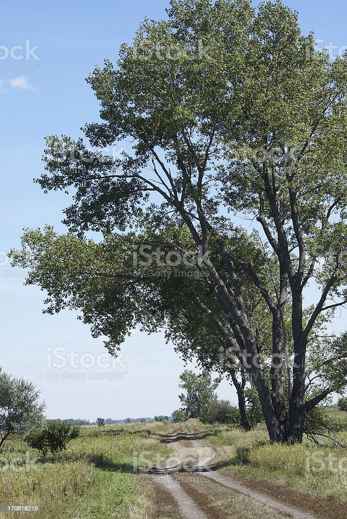 dirt road and cottonwood tree royalty-free stock photo