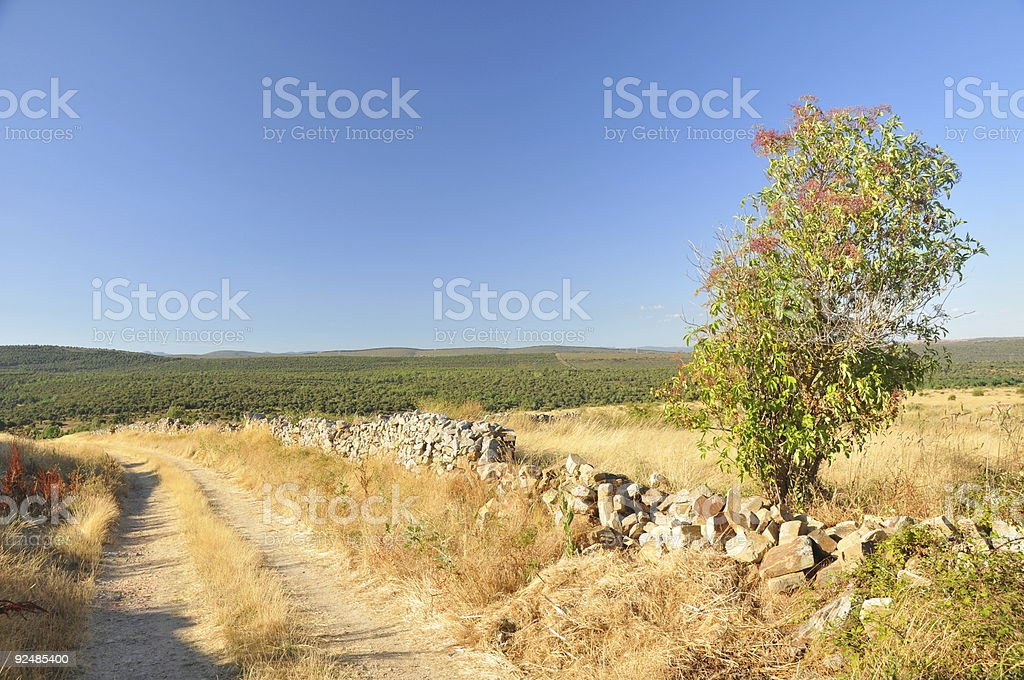 dirt road and forest highlands royalty-free stock photo
