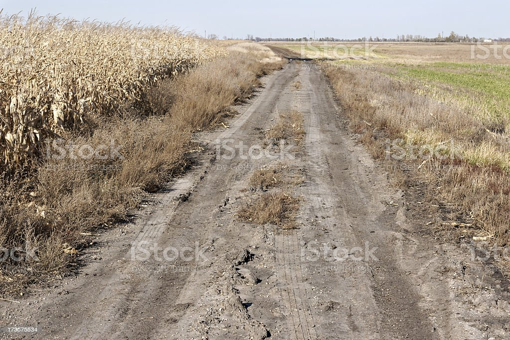 A dirt road by a cornfield in North Dakota, USA.  royalty-free stock photo