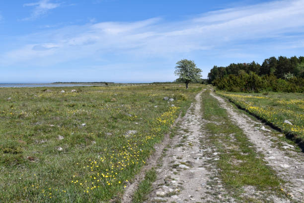 Dirt road in a beautiful coastland by spring season stock photo