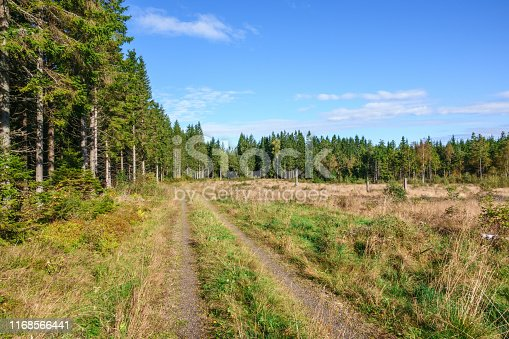 Dirt road in a clear-felled forest