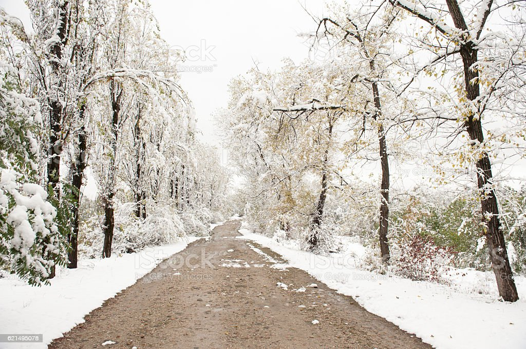 dirt road in a winter park foto stock royalty-free