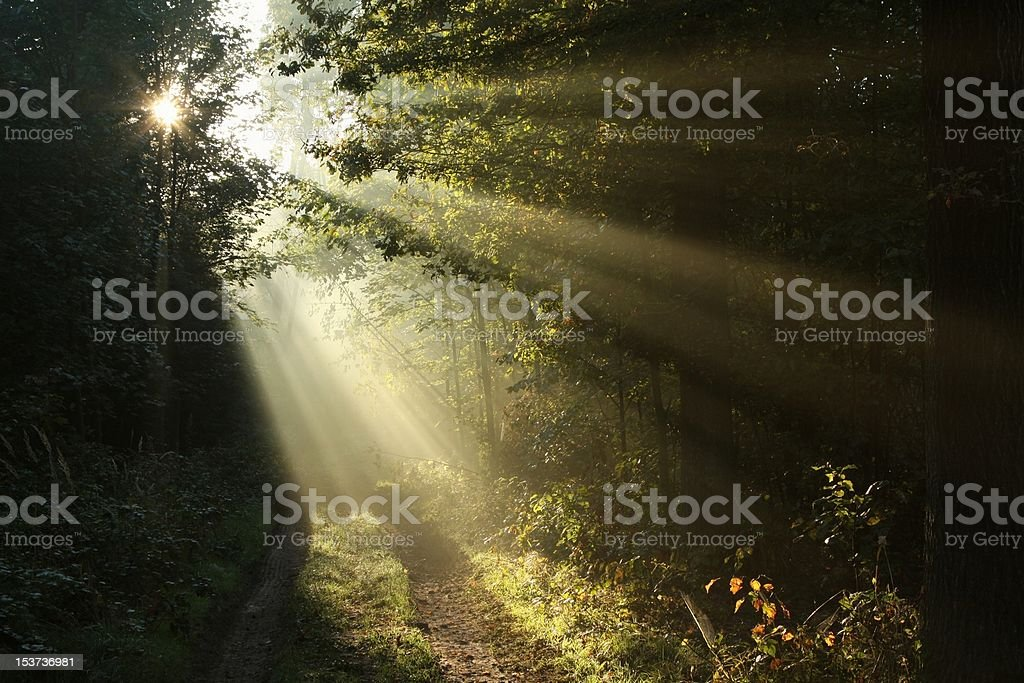 Dirt road in autumn forest at dawn royalty-free stock photo