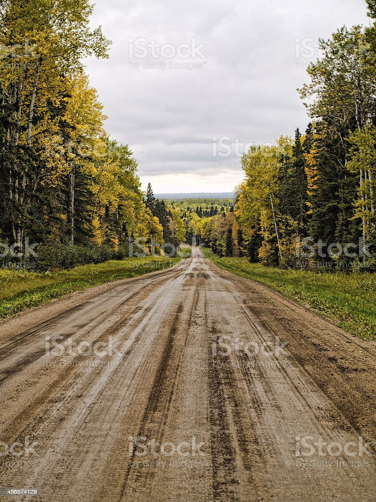 Dirt Road in Forest stock photo