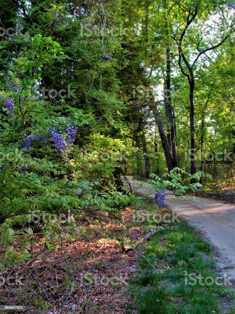Dirt Road In Forest royalty-free stock photo