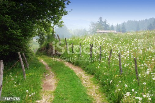 A dirt road in a rural spring landscape. Meadows with wildflowers.