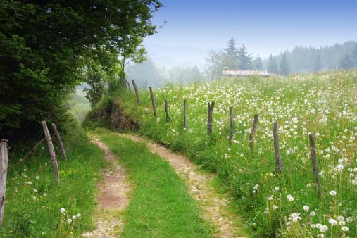 Dirt road in rural spring landscape
