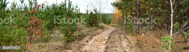 Dirt road in the autumn forest autumn landscape banner panorama picture id800441522?b=1&k=6&m=800441522&s=612x612&h=suduo64ic5mr m6euxaekq7ivbicnpslzupflunfkck=
