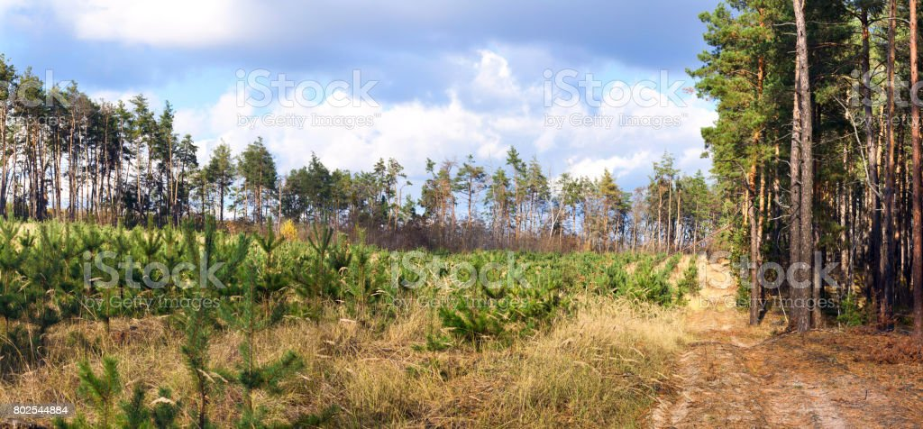Dirt road in the autumn forest -- autumn landscape, banner, panorama stock photo