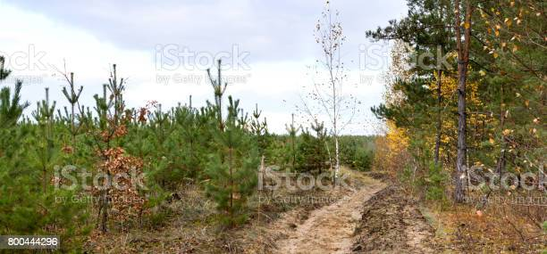 Dirt road in the autumn forest autumn landscape panorama picture id800444296?b=1&k=6&m=800444296&s=612x612&h=30tgrja3sar1gxlz n2dtsyhi9rb6 gyyz6pbodhehe=