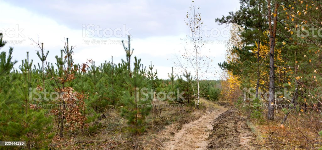 Dirt road in the autumn forest -- autumn landscape, panorama stock photo