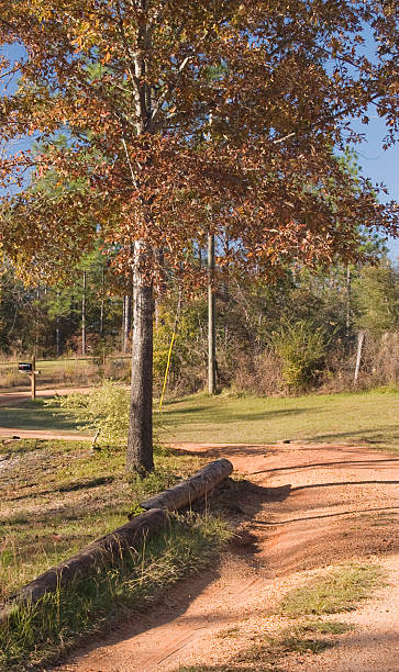 Dirt Road in the Country stock photo