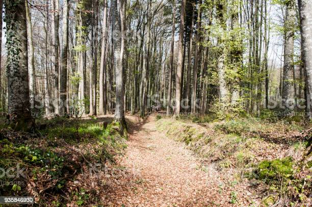 Photo of Dirt road in the forest