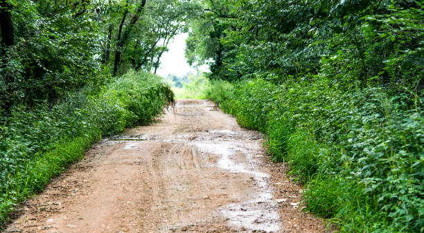 Dirt road in the forest stock photo