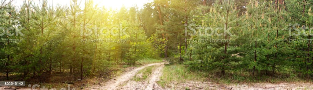 Dirt road in the forest -- spring summer landscape, banner, panorama stock photo