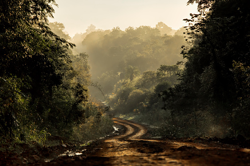Dirt road in the jungle