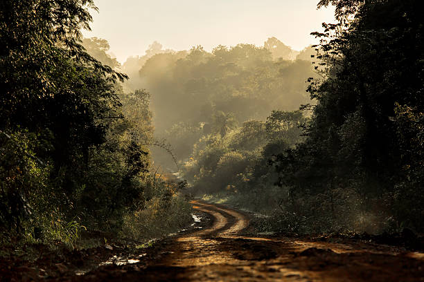 Carretera de tierra en la selva - foto de stock