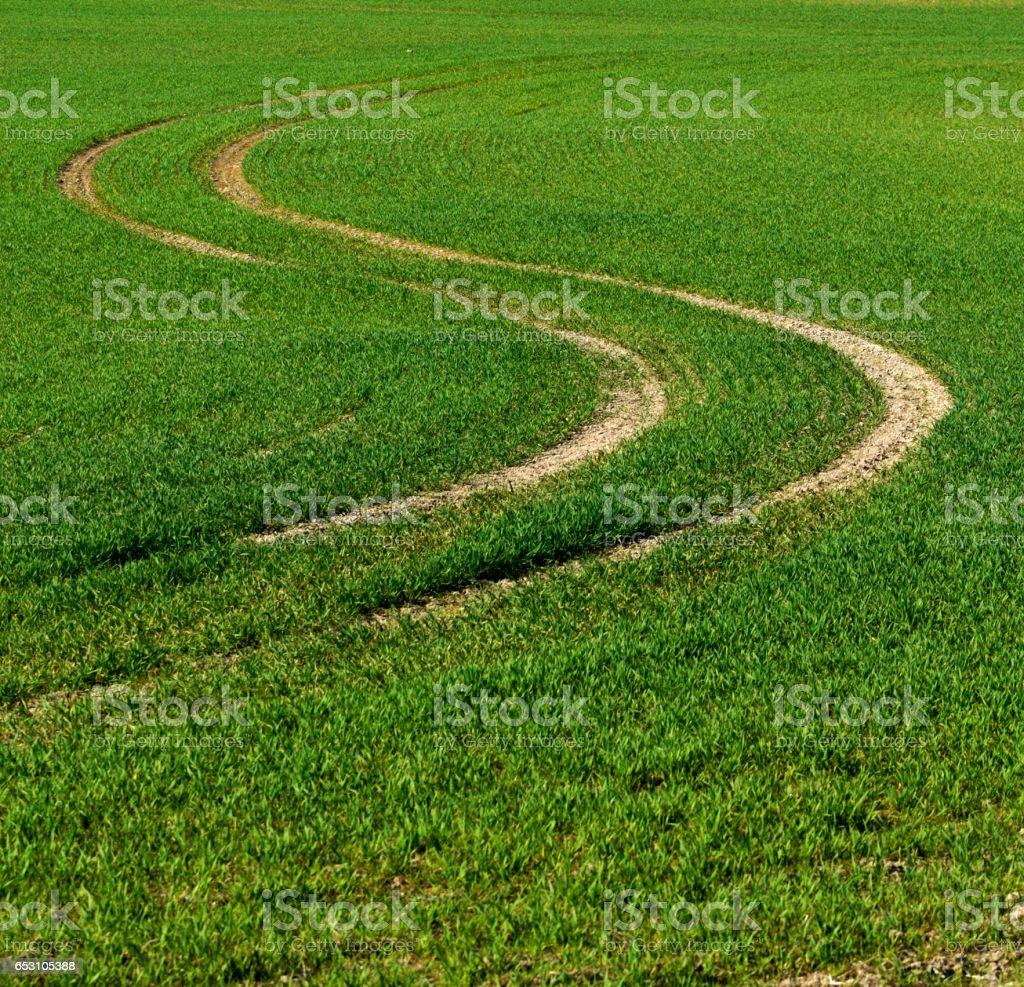 Dirt road in the wheat field. stock photo