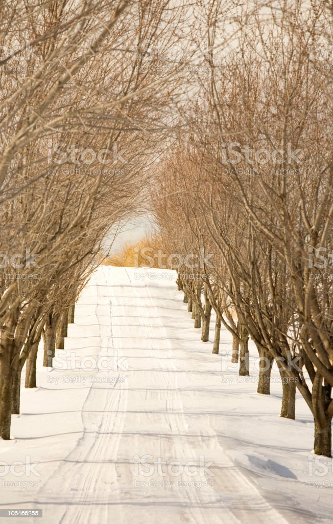 Dirt Road in Winter royalty-free stock photo