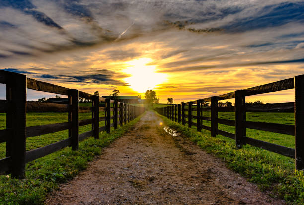 dirt road  leading to a barn with sunset - farm stock pictures, royalty-free photos & images