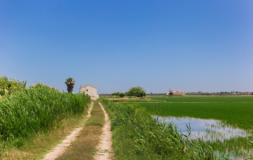 Dirt road leading to a white house in the rice fields of La Albufera, National Park, Spain