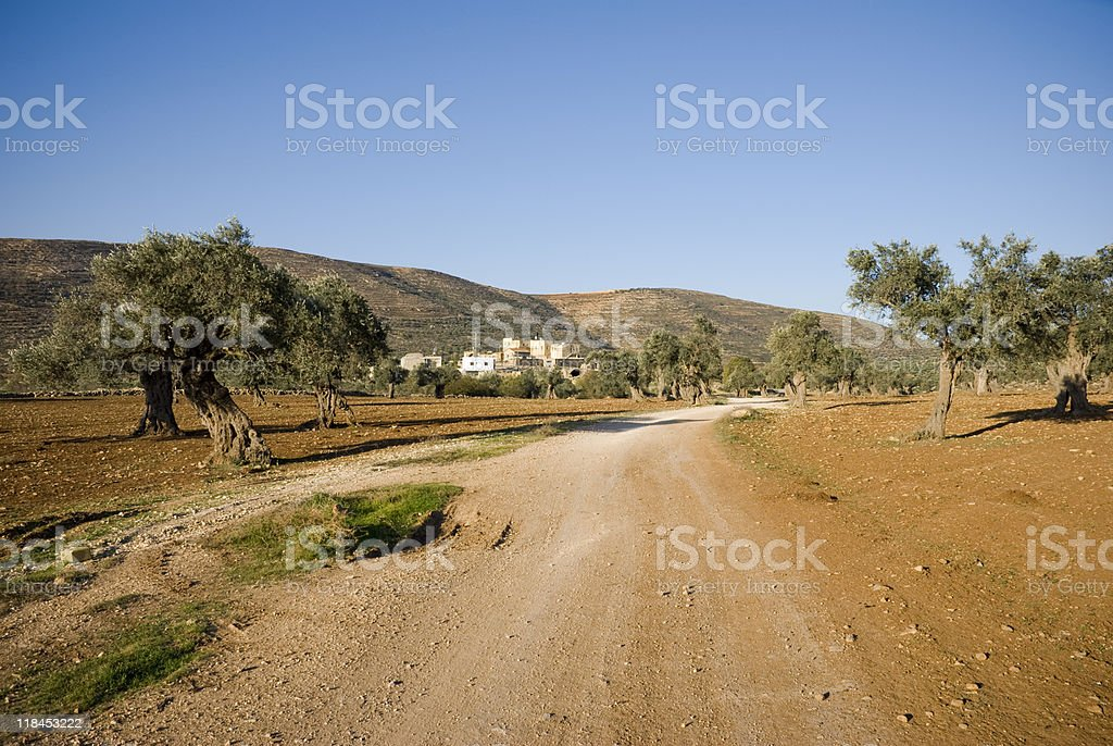 dirt road through olive trees in northern West Bank (Palestine) royalty-free stock photo