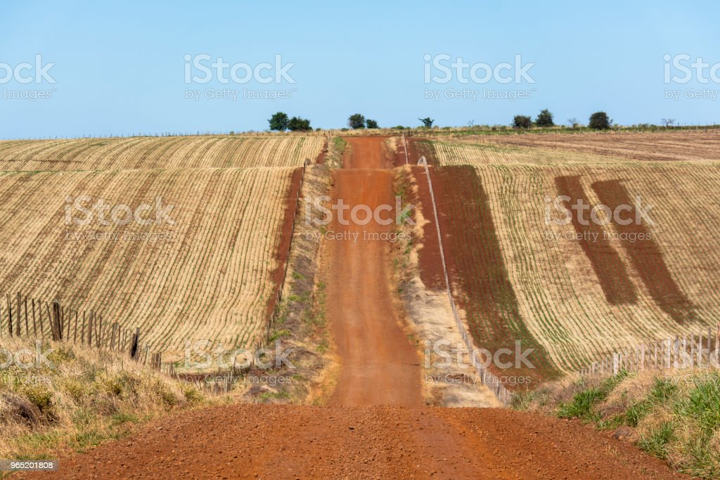 Dirt road passing in the middle of farms with fence royalty-free stock photo