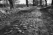 A dirt road paved with stones and deciduous trees during autumn in Poland, monochrome