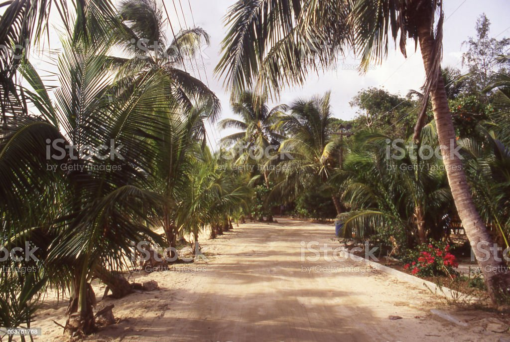 Dirt road through coconut trees on Roatan Bay Islands Honduras stock photo