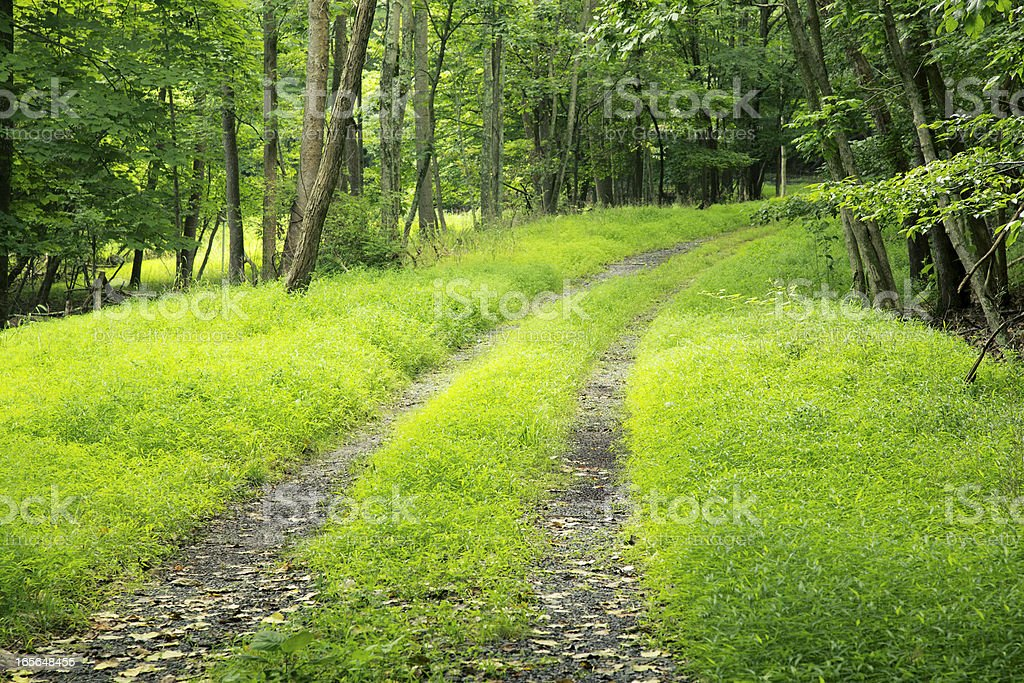 Dirt Road through Dense Forest royalty-free stock photo