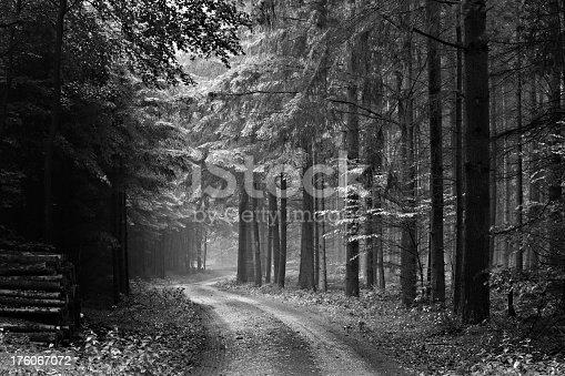 Dirt Road through rainy Forest