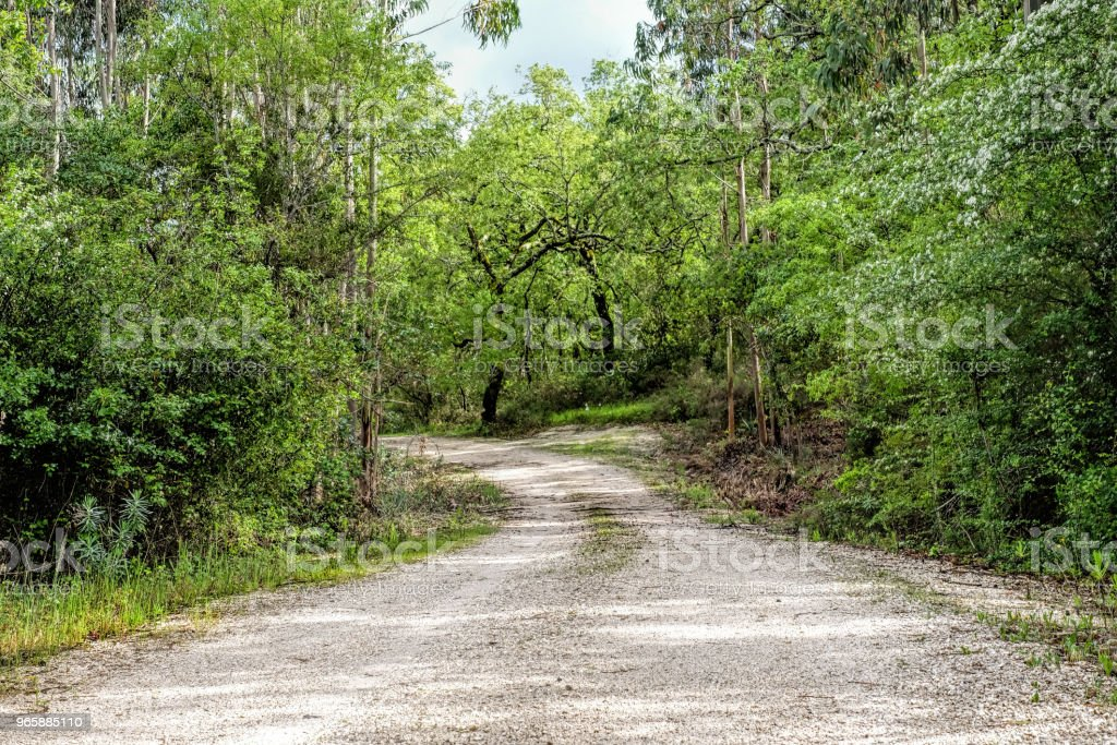 Onverharde weg via bos in Portugal - Royalty-free Berg Stockfoto